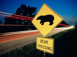 wildlife-corridor-florida-proposed-crossing-bear_63052_600x450